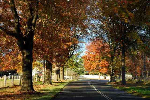Image result for tenterfield